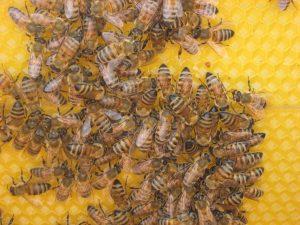 ruche-300x225 فوائد غذاء ملكات النحل