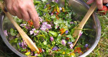 طبخ نباتات البرية