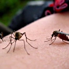 مكافحة البعوض